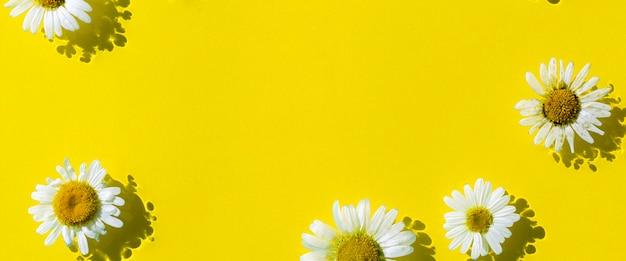 Kamille bloemen op een gele water achtergrond. bovenaanzicht plat lag. banier.