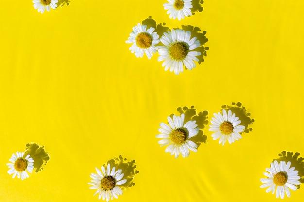 Kamille bloemen op een gele water achtergrond. bovenaanzicht plat lag.