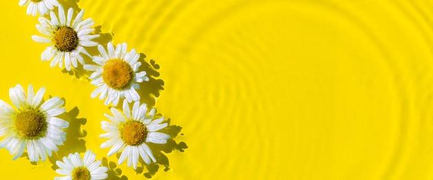 Kamille bloemen op een gele waterachtergrond met concentrische cirkels van een druppel. bovenaanzicht plat lag. banier.