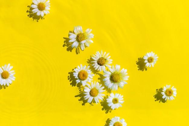 Kamille bloemen op een gele waterachtergrond met concentrische cirkels van een druppel. bovenaanzicht plat lag.