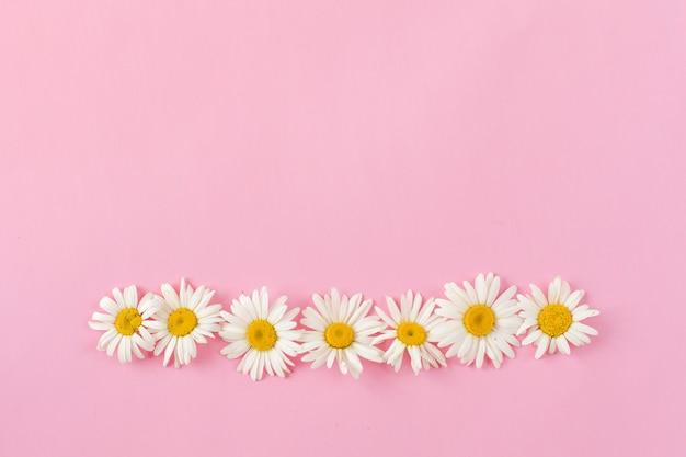 Kamille grens met kopie ruimte op roze achtergrond. platte laag, bovenaanzicht