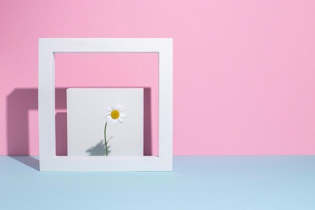 Kamille in een vierkante witte lijst, een presentatiepodium op een roze-blauwe achtergrond.