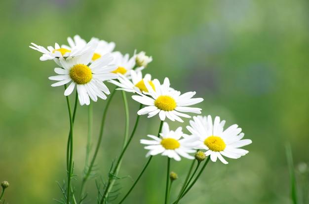 Kamilles bloemen