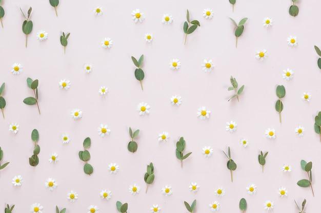 Kamilles en bladerensamenstelling voor achtergrond