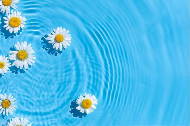 Kamilles op een achtergrond van blauw water onder natuurlijk licht. bovenaanzicht, plat gelegd.