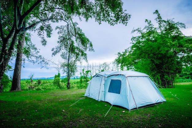 Kamperen en tent onder boom in natuurpark
