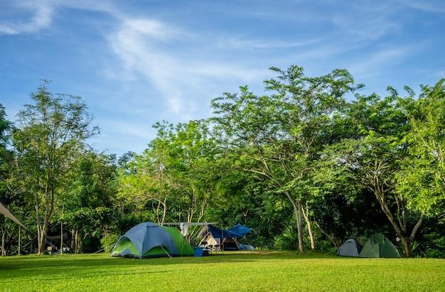 Kamperen en tent op groen gras onder de bomen met blauwe lucht in natuurpark