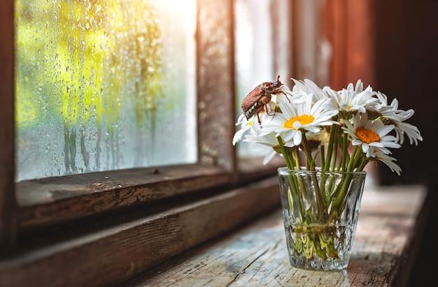 Kan een boeket kamillebloemen in een glazen vaas op een oude rustieke houten vensterbank, een nat raam na regen en een zonnestraal kevers.