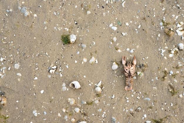 Kanker ligt op het zand met schelpen