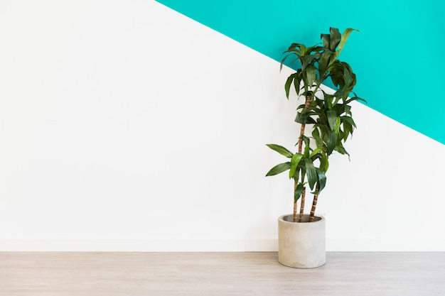 Kantoor plant voor muur