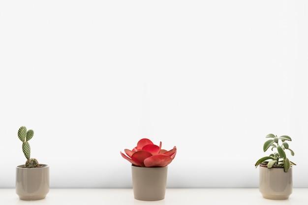 Kantoorplanten in bloempotten