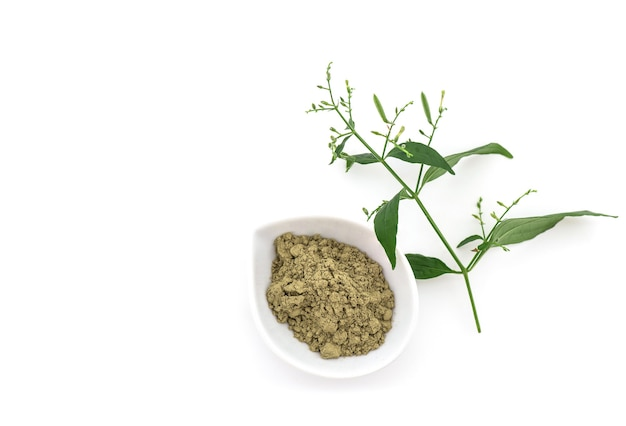 Kariyat of andrographis paniculata, tak groene bladeren en poeder geïsoleerd op wit