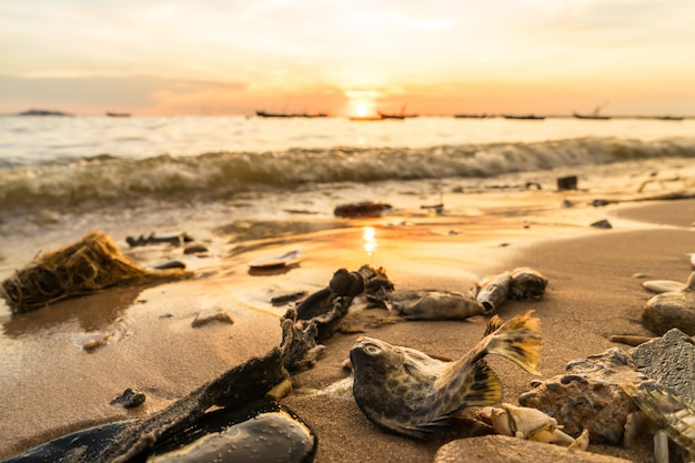 Karkassen van zeedieren op het strand tijdens zonsondergang