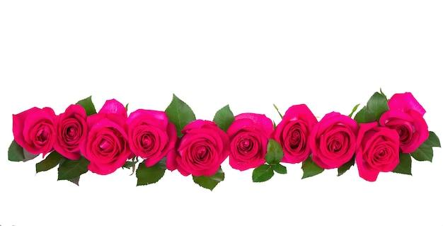 Karmozijnrode rozenbloem die op witte oppervlakte wordt geïsoleerd
