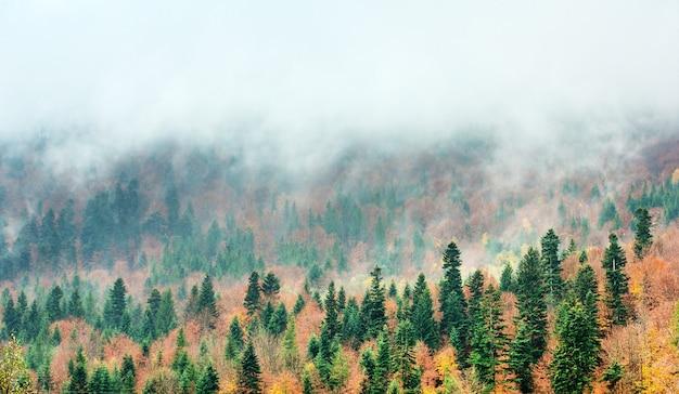 Karpaten zonnige berglandschap Premium Foto
