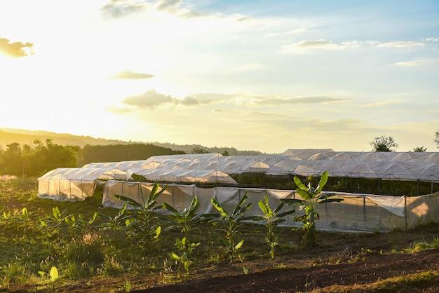 Kas groenteplanten en fruitteelt landbouwproducten daken landbouw met zonsondergang
