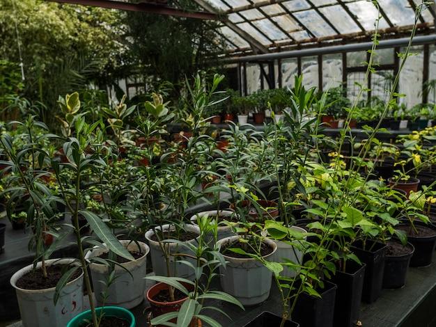 Kas met een groot aantal verschillende kleuren in potten op tafels. kamerplanten in de glazen kas