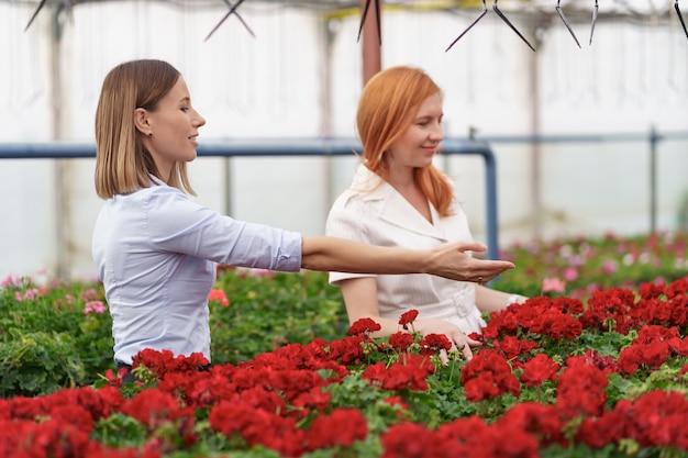 Kaseigenaar presenteert geraniumbloemen aan een potentiële klantendetailhandelaar.