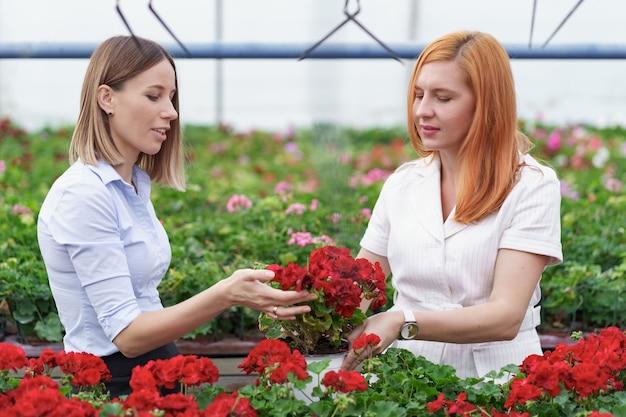 Kaseigenaar presenteert geraniumbloemen aan een potentiële klantendetailhandelaar. Gratis Foto