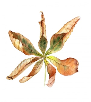 Kastanje herfstblad geïsoleerd op een witte achtergrond vintage aquarel illustratie