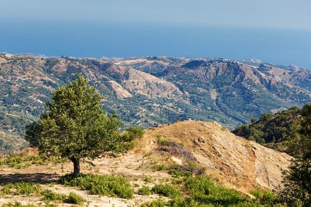 Kastanjeboom in calabrian landschap