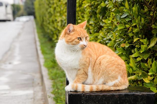 Kastanjebruine zwervende kattenzitting op poort in wooncomplex, en kijkt weg. het probleem van zwerfdieren.