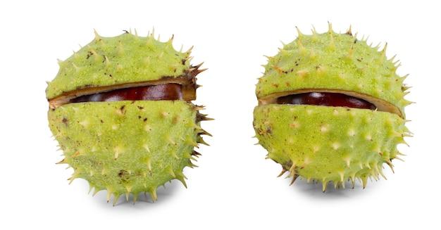 Kastanjes in hun buitenste groene braam of schil die gedeeltelijk opengebarsten is om de bruine pitten binnenin over wit te onthullen