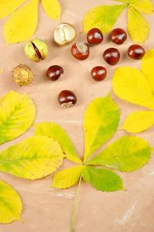 Kastanjes met esdoorn herfstbladeren - paardenkastanje