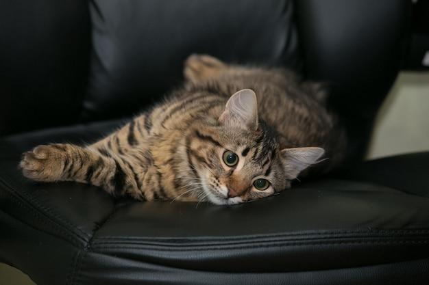 Kat bij de bureaustoel