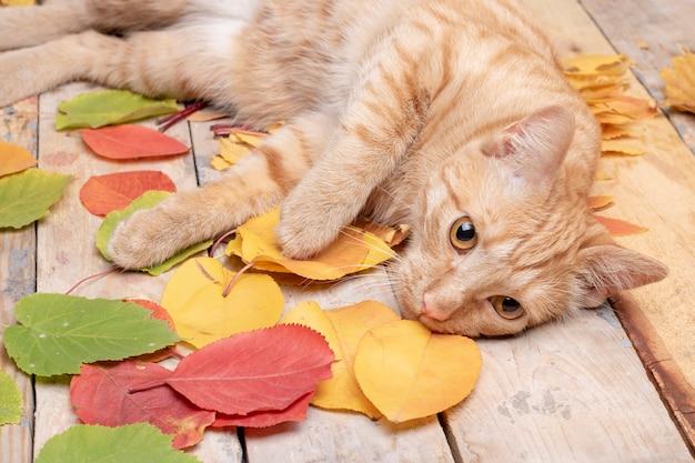 Kat die dichtbij de herfstbladeren ligt op houten