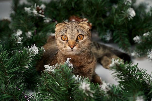 Kat die naast dennentakken ligt - het concept van een gezellig huis voor kerstmis.