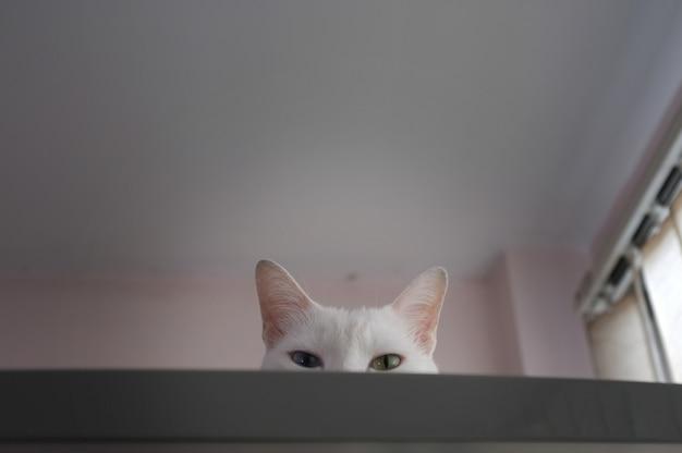 Kat die nieuwsgierig naar buiten gluren
