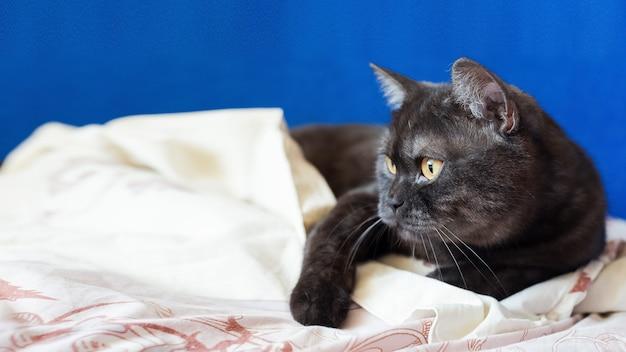 Kat die op de deken legt