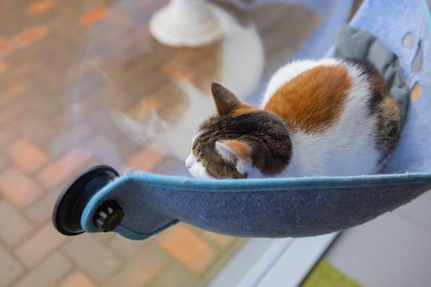 Kat die thuis in bed op glas aan de muur ligt.
