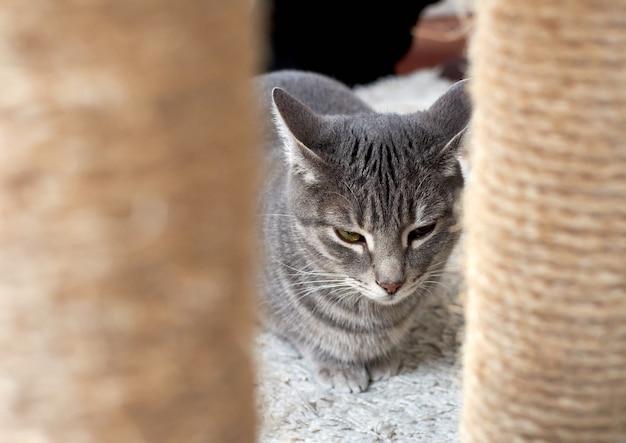 Kat door de poten van een kattentoren