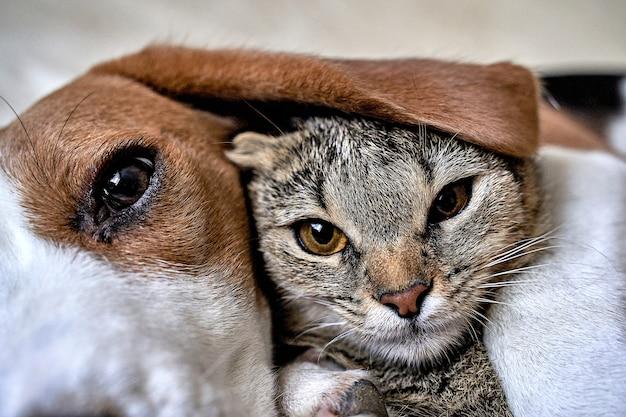 Kat en hond houden van vriendschap ontmoeting kennismaking