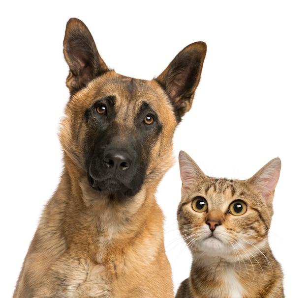 Kat en hond op wit wordt geïsoleerd