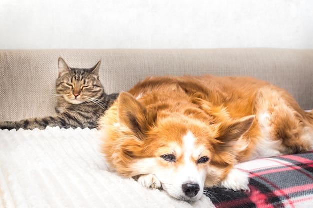 Kat en hond slapen samen op het bed