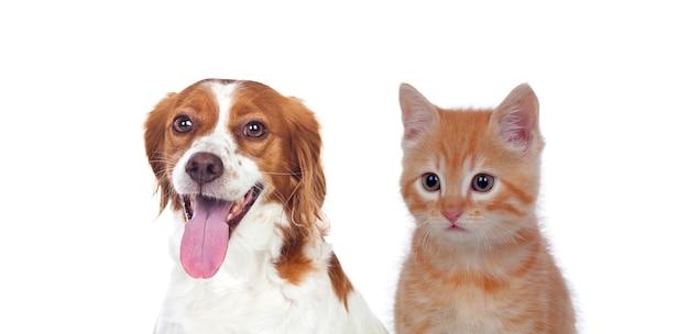 Kat en hond zitten vooraan en kijken naar camera geïsoleerd op een witte achtergrond