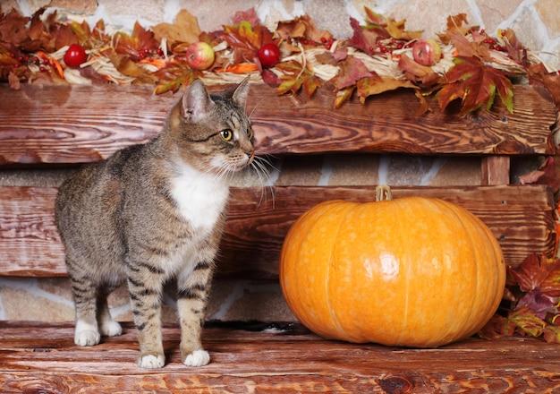 Kat en pompoen, herfst