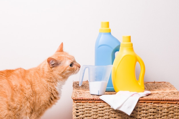 Kat en waspoeder op backet