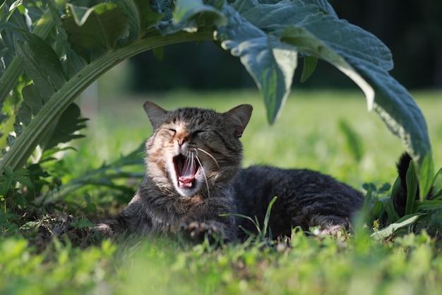 Kat geeuwen relaxig onder groot groen artisjokblad