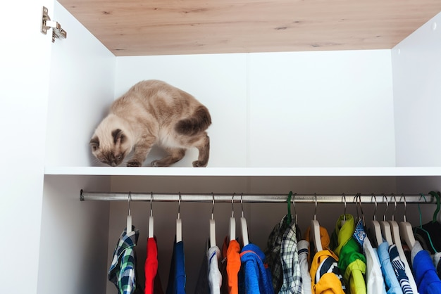 Kat in de kast. huisdier, levensstijl. kledingkast met kleding. witte moderne kast binnen. opslag organisatie. orde en netheid. hangers met verschillende kleren in huisgarderobe.