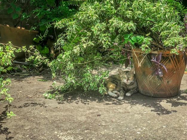 Kat in de schaduw, waakzaam en wakker de fotograaf die het fotografeert.