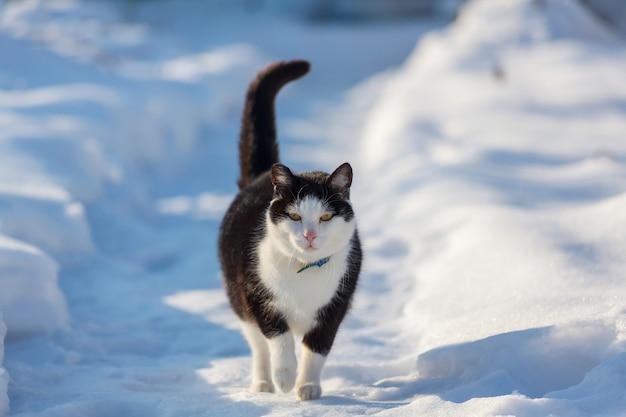 Kat in de sneeuw in het winterseizoen