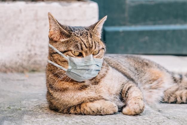 Kat in een medisch masker in quarantaine op straat.