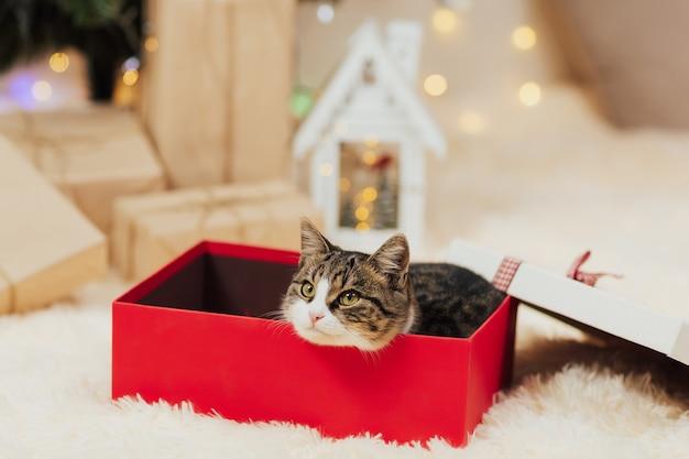 Kat in geschenkdoos.