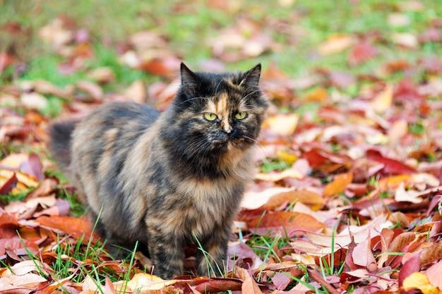 Kat in herfst park. schildpadkatje die op kleurrijke gevallen bladeren lopen openlucht.