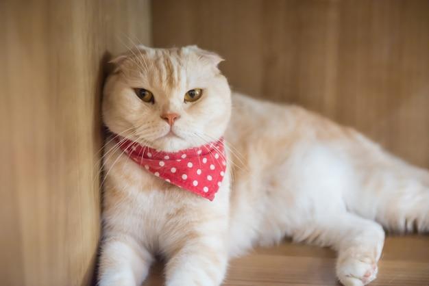 Kat in het café