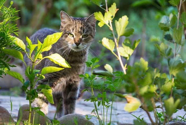 Kat in het groene gras